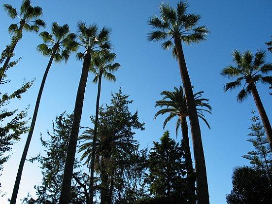 Massif jardin palmier nice maison design for Garage les palmiers nice
